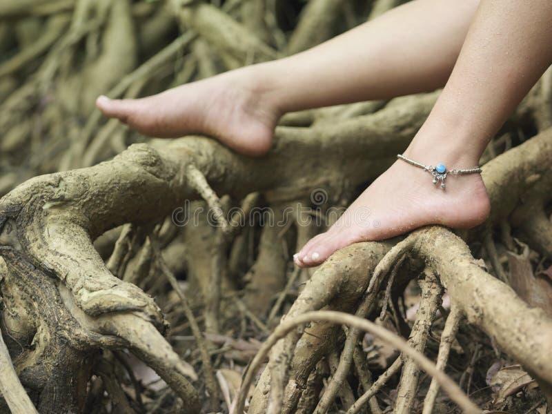 I piedi nudi della donna sulle radici immagine stock libera da diritti