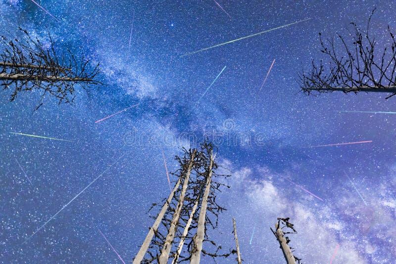 I pini blu delle stelle cadenti della Via Lattea si sono illuminati fotografie stock