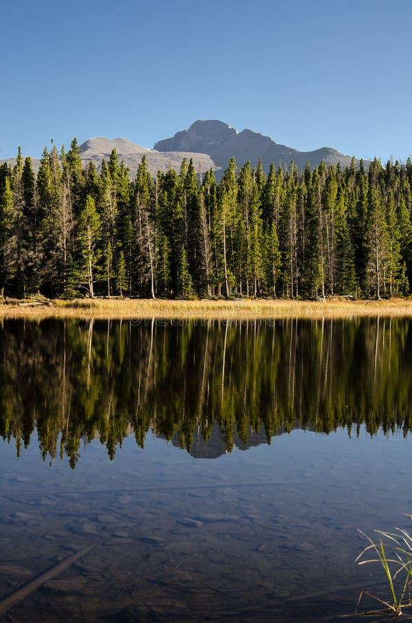 I pini riflettono nel verticale del lago fotografie stock libere da diritti
