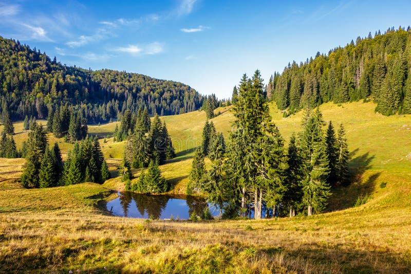 I pini si avvicinano al lago sul prato fotografie stock libere da diritti