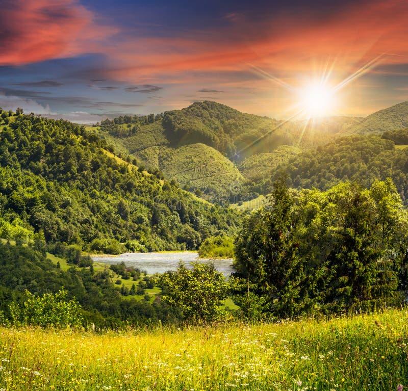 I pini si avvicinano al prato in montagne al tramonto fotografie stock