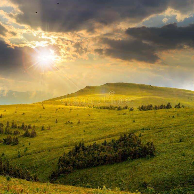 I pini si avvicinano alla valle in montagne sul pendio di collina al tramonto fotografia stock