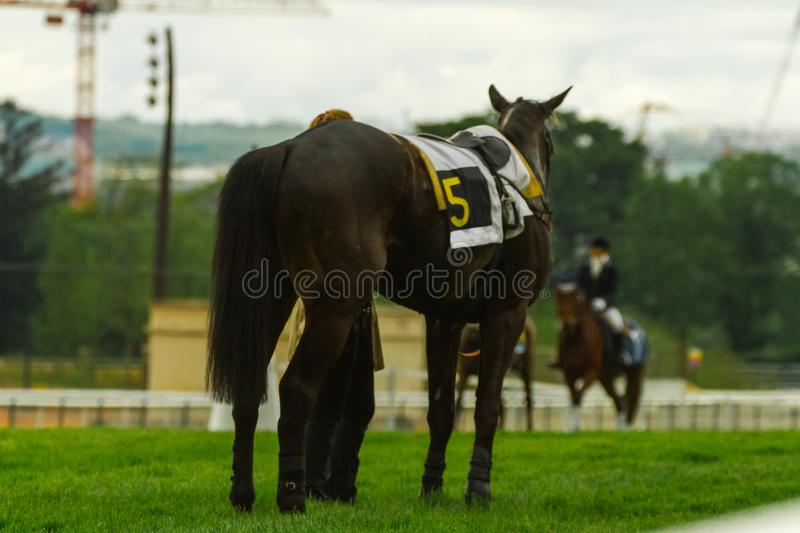 `I am a poor lonesome cowboy`, feels this horse after a race at Hippodrome d`Auteuil Paris royalty free stock photos