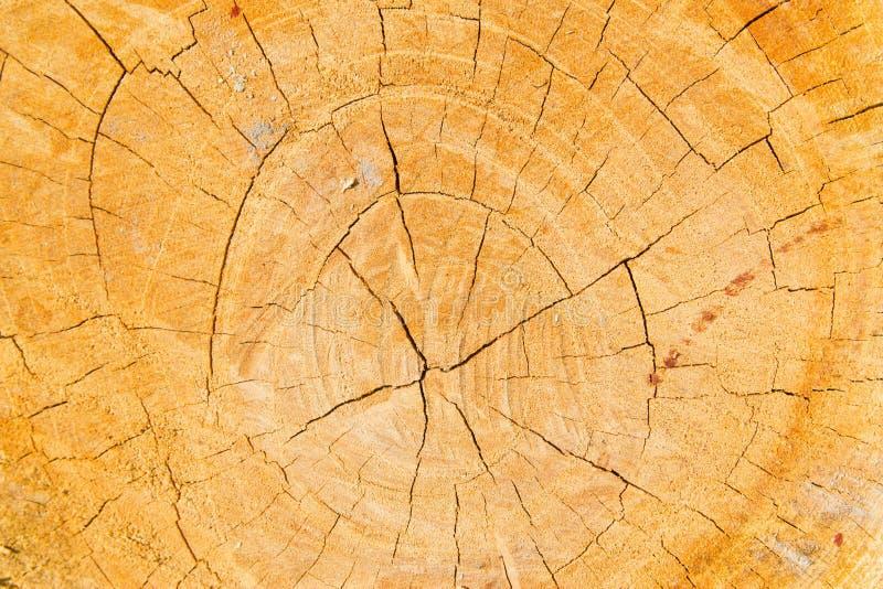 I precedenti dell'albero. Anelli annuali. fotografie stock libere da diritti