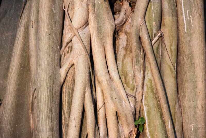 I precedenti e la struttura di arte dall'albero fotografia stock libera da diritti