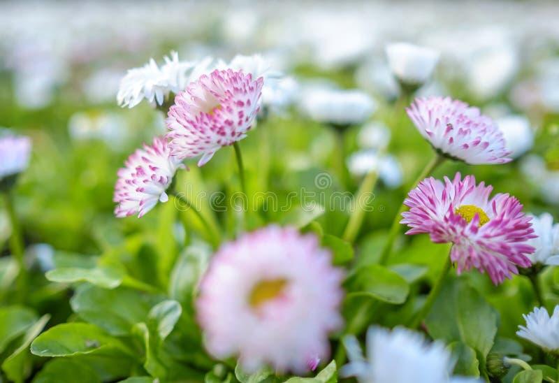 I primi fiori 6 della molla fotografia stock