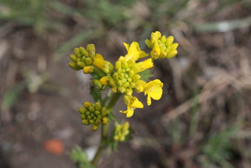 i primi fiori della molla nel parco immagine stock libera da diritti