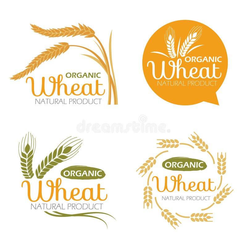 I prodotti organici del grano della risaia del riso giallo del grano e l'insegna sana dell'alimento firmano la progettazione stab illustrazione di stock