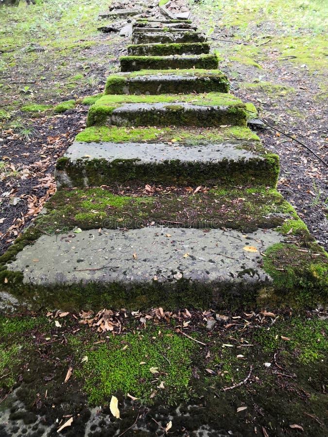 I punti di pietra conducono verso l'alto, i diversi punti sono coperti di muschio immagine stock libera da diritti