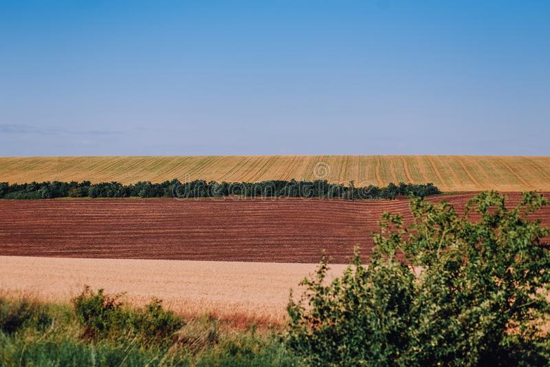 i raccolti agricoli del bello campo remano le onde delle bande fotografia stock