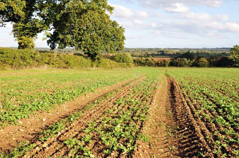 I raccolti del terreno coltivabile fotografie stock libere da diritti
