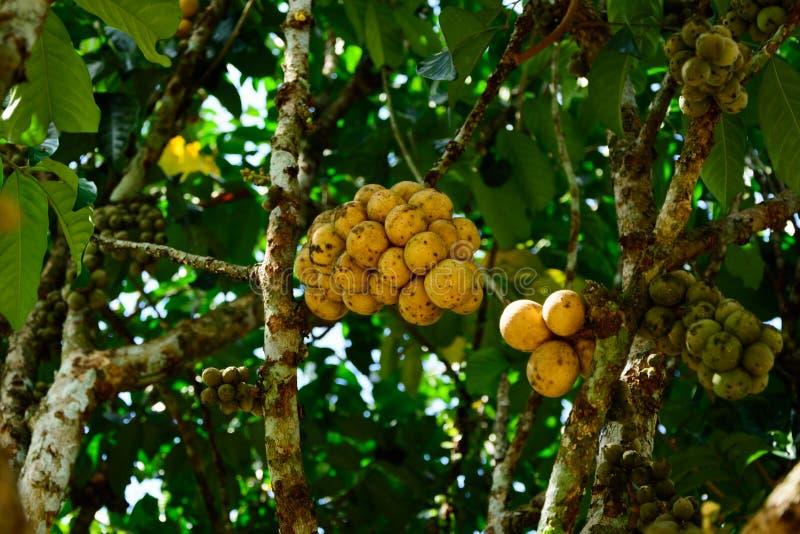 I raccolti di Wollongong in Tailandia immagine stock libera da diritti