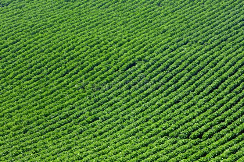 I raccolti e nel solco fotografia stock libera da diritti