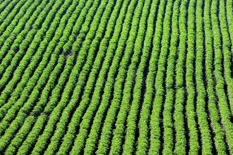 I raccolti e nel solco immagine stock