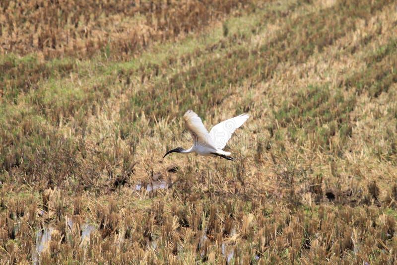 I raccolti, giardino, alberi ed uccelli immagine stock libera da diritti