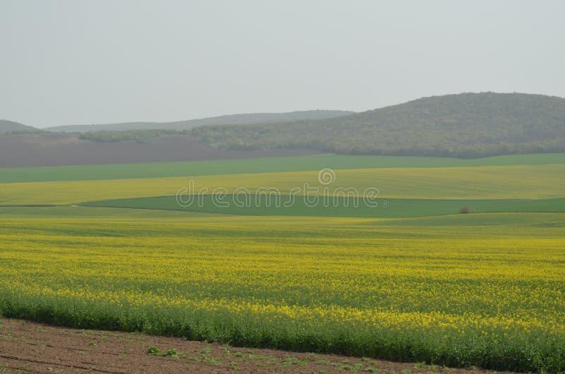 I raccolti nel distretto di Tulcea, Romania fotografia stock libera da diritti