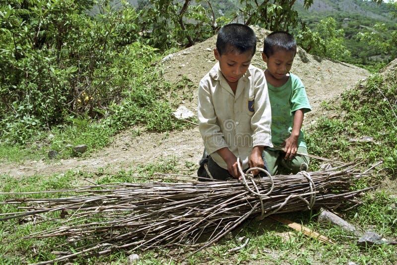 I ragazzi indiani guatemaltechi riuniscono la legna da ardere fotografia stock