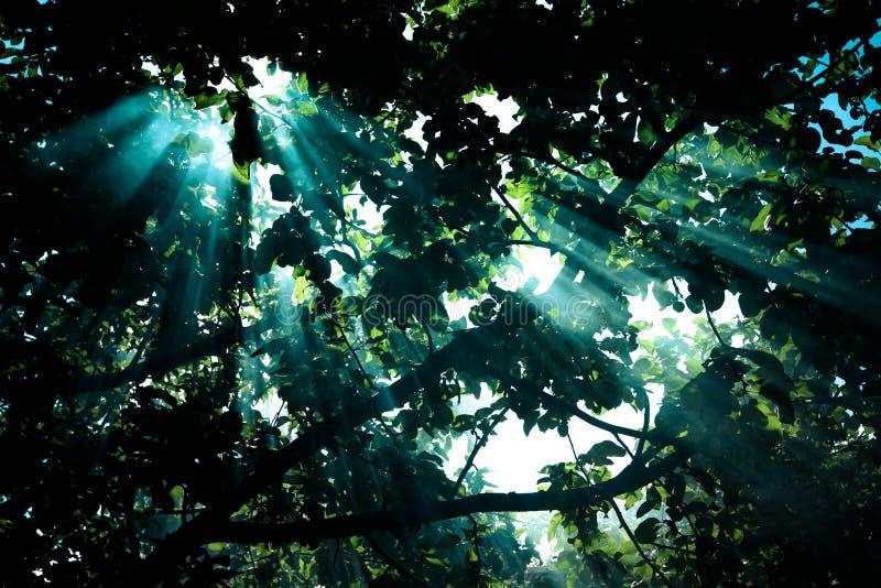 I raggi del sole che passano attraverso la pera e che accendono diagramma tinte fotografia stock