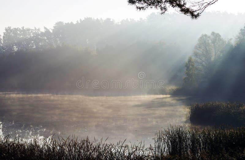 I raggi del sole di mattina che splende attraverso la nebbia sopra il lago fotografia stock libera da diritti