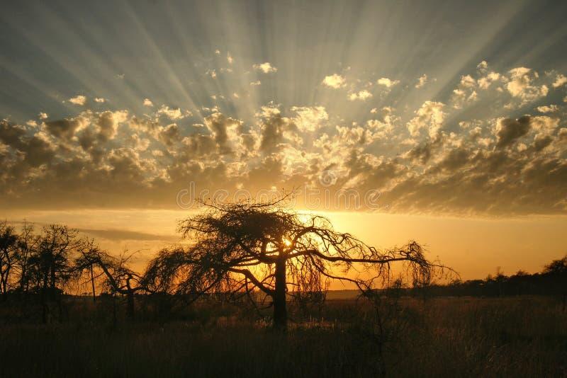 I raggi del sole splendono attraverso una nuvola stupefacente dietro una siluetta sola dell'albero fotografie stock libere da diritti
