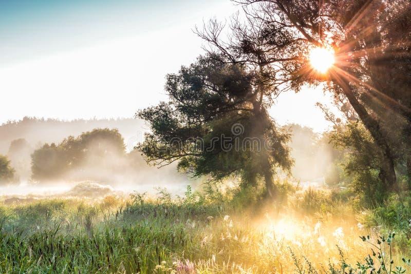 I raggi del Sun attraverso una siluetta del ` s dell'albero e della nebbia all'alba immagine stock