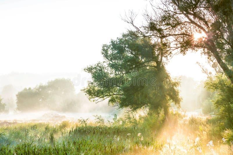 I raggi del Sun attraverso una siluetta del ` s dell'albero e della nebbia all'alba fotografia stock
