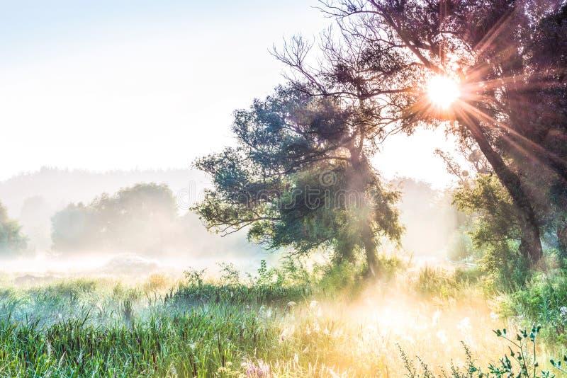 I raggi del Sun attraverso una siluetta del ` s dell'albero e della nebbia all'alba fotografie stock