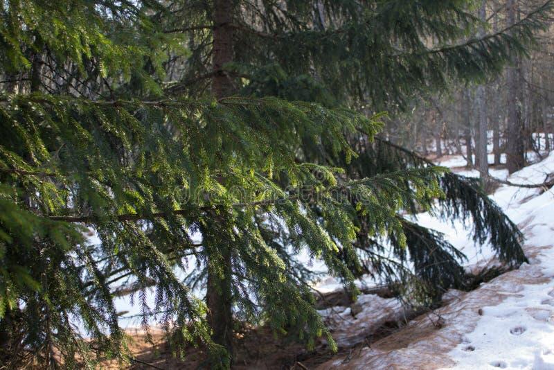 I rami attillati si sono accesi dal sole nell'inverno fotografie stock