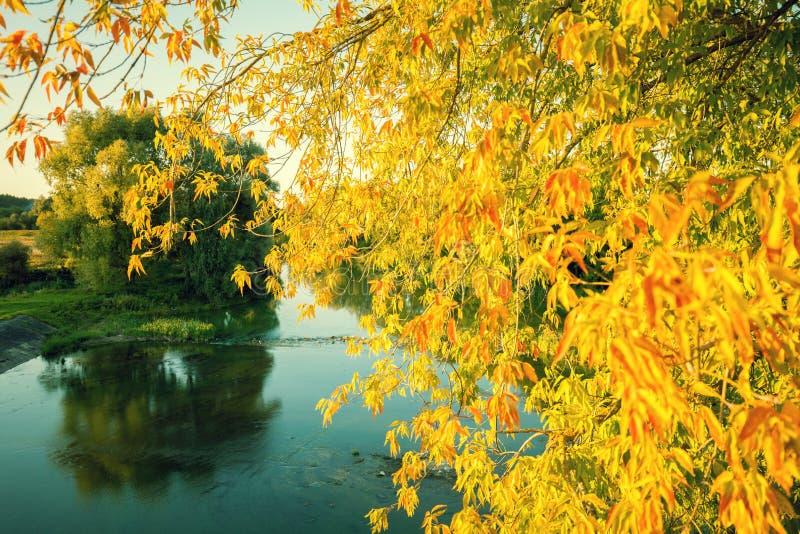 I rami con le foglie gialle si sono chinati il lago immagini stock