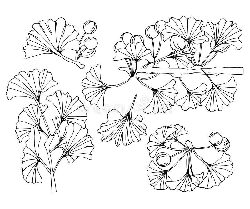 I rami del ginkgo biloba inchiostrano l'arte royalty illustrazione gratis