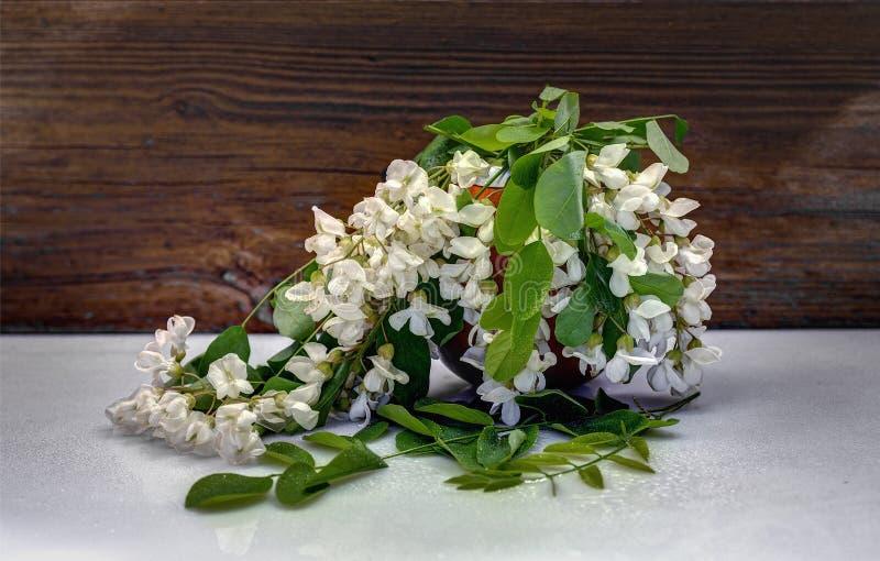 I rami dell'acacia bianca fotografia stock