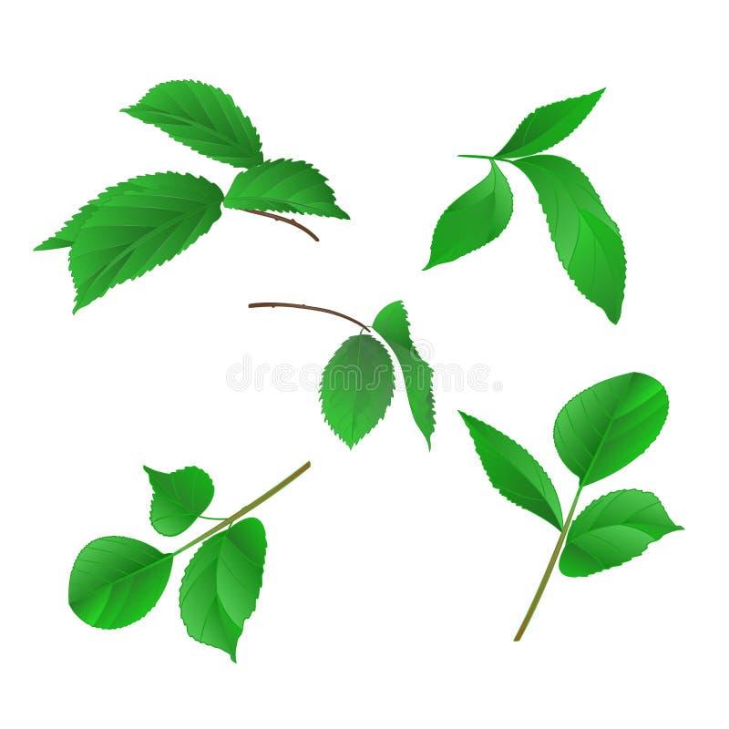 I rami delle rose con il vettore d'annata di tiraggio della mano delle foglie hanno messo in primo luogo illustrazione di stock