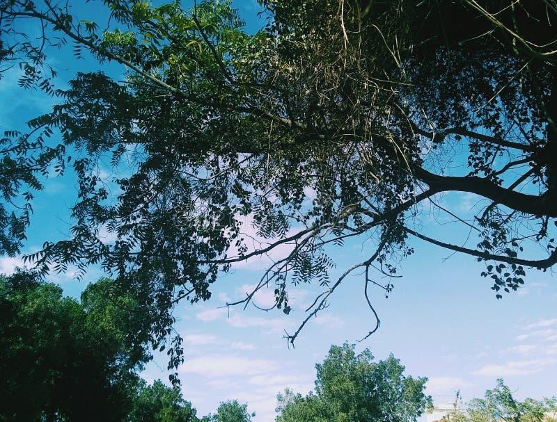 I rami di alberi con i cieli nuvolosi fotografia stock