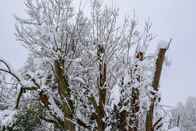 I rami di albero hanno coperto di neve in campagna francese durante la stagione/inverno di Natale fotografia stock libera da diritti