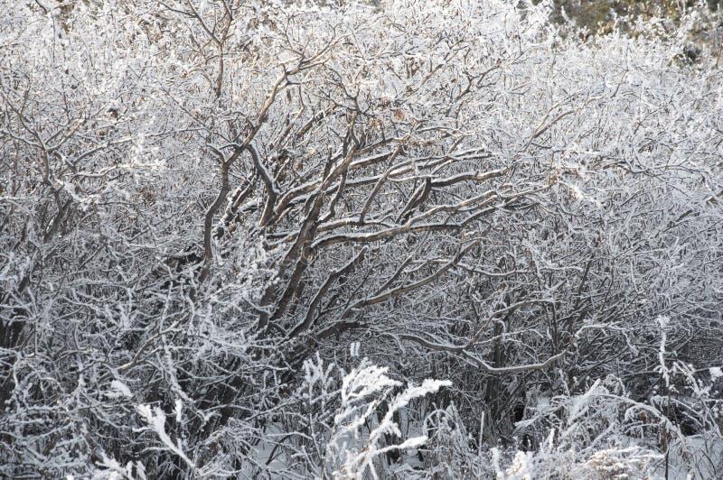 I rami di inverno congelati fondo immagini stock libere da diritti