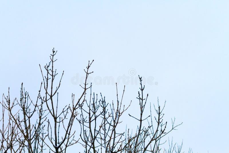 I rami nella neve fotografie stock