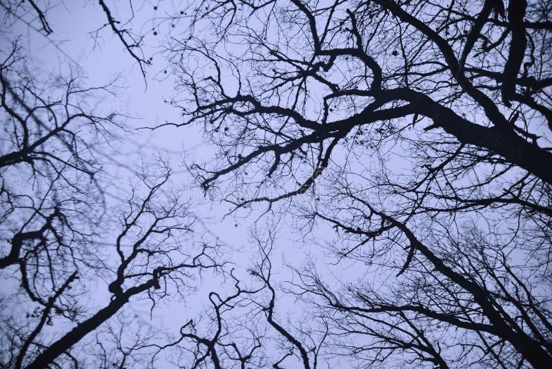 I rami nudi degli alberi immagine stock