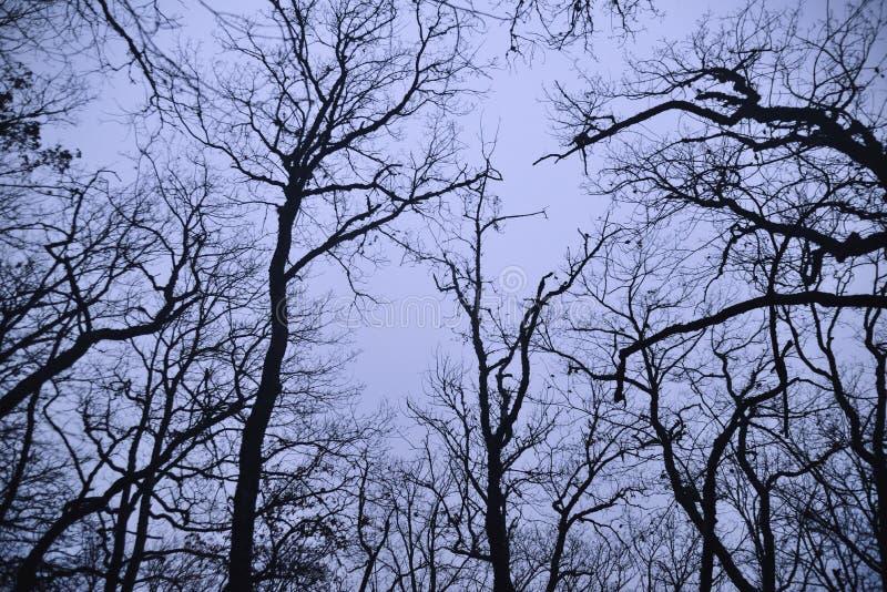 I rami nudi degli alberi nella notte fotografia stock libera da diritti