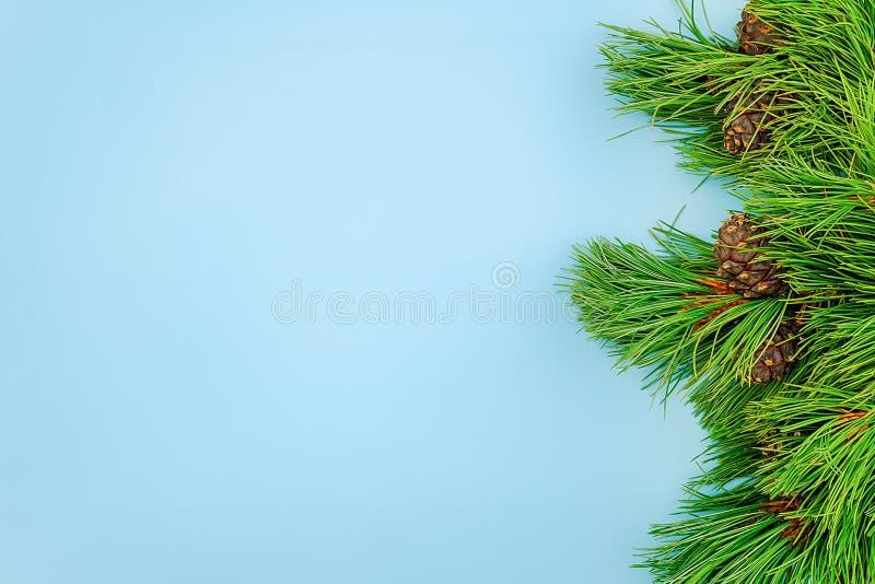 I rami sempreverdi naturali del cedro con i coni rasentano il fondo blu Modello per la vostra progettazione, invito di vista supe fotografia stock