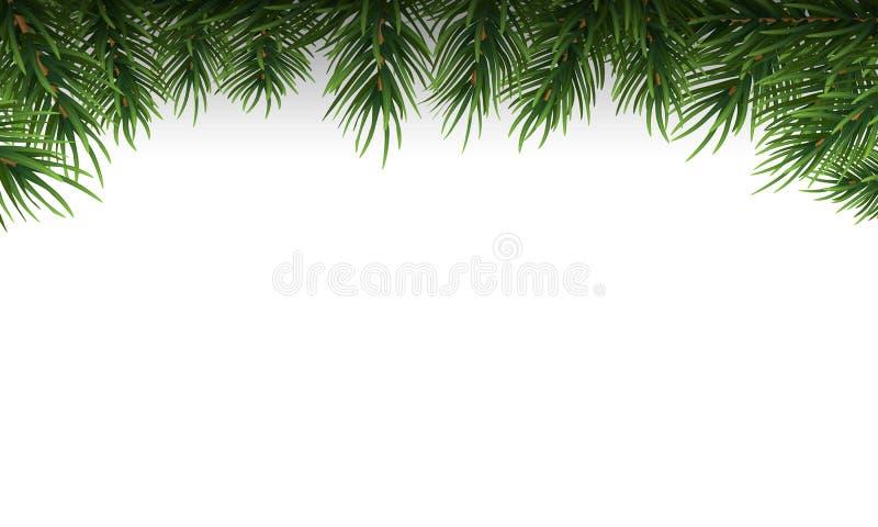 I rami verdi dell'albero di Natale rasentano un fondo bianco Illustrazione di vettore illustrazione vettoriale
