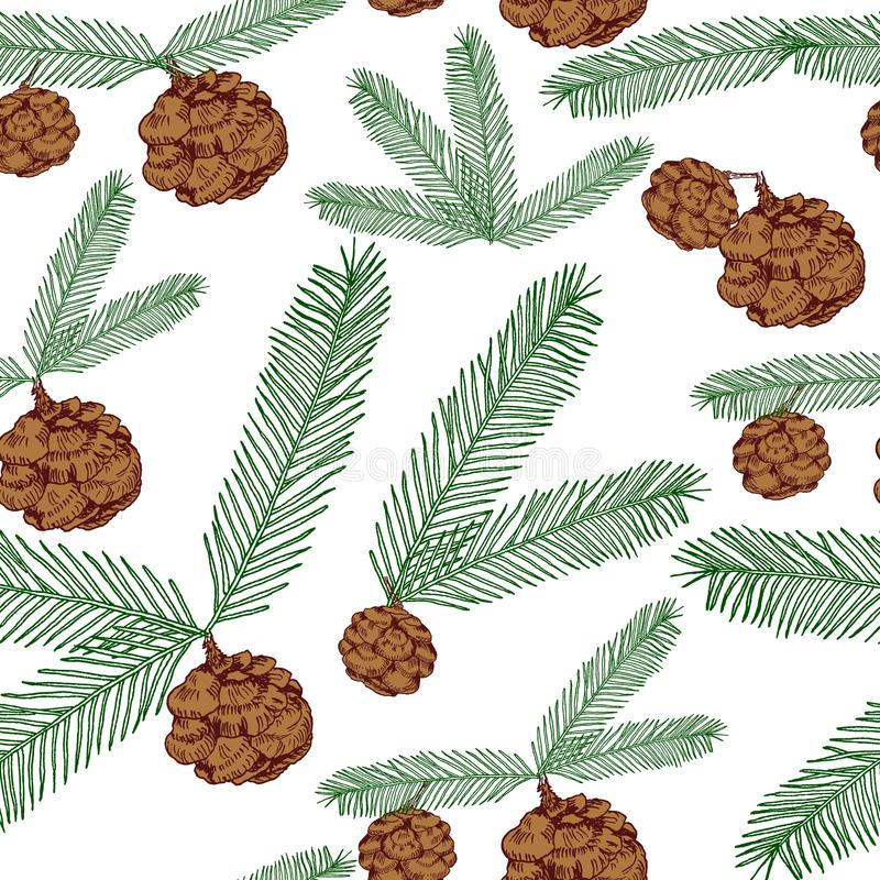 I ramoscelli senza cuciture ed i coni dell'albero del modello hanno dipinto la linea e colorati su bianco Albero, abete, pigne, r illustrazione vettoriale