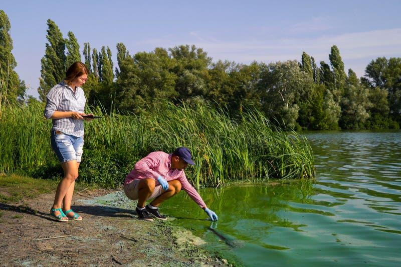 I ricercatori degli ecologi prelevano i campioni delle alghe verdi e digitano i dati sulla compressa immagine stock libera da diritti