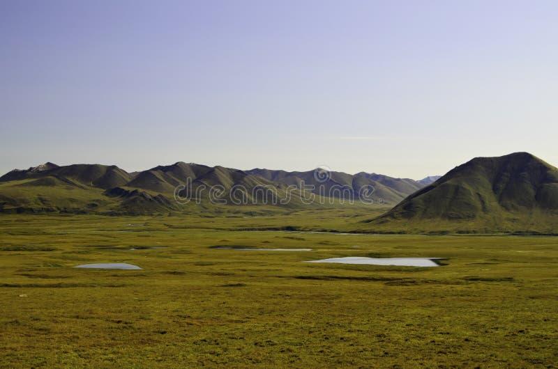 I ruscelli nell'Alaska fotografia stock