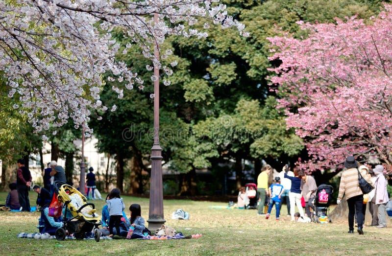 I Sakura Hanami har en populär fritidsaktivitet i våren, folk en picknick på den gräs- jordningen royaltyfria foton