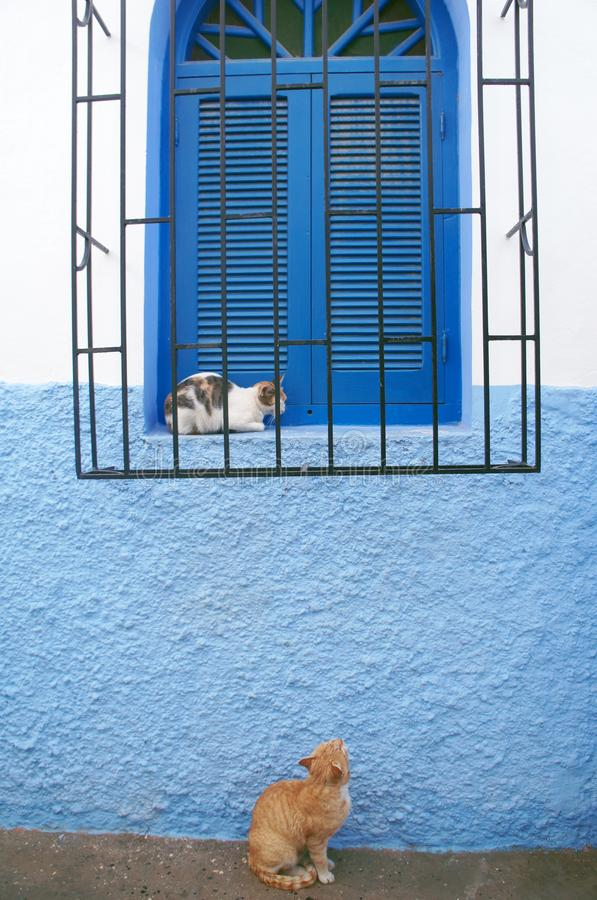The story of two cats when I met in Asilah. When I saw this moment I just want to took the shot for them ,don& x27;t  you think this is a romantic story ?  cats royalty free stock photo