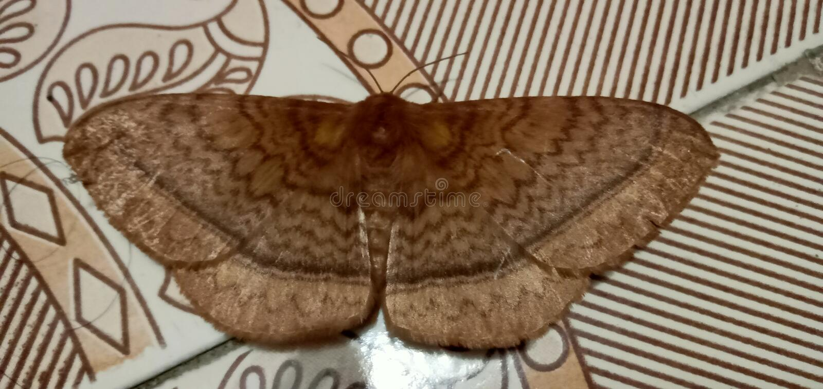 I see a butterfly in my house. In a rainy day suddenly I see a beautiful butterfly in my house. I will really help to see that. My sister also be happy to see stock photo