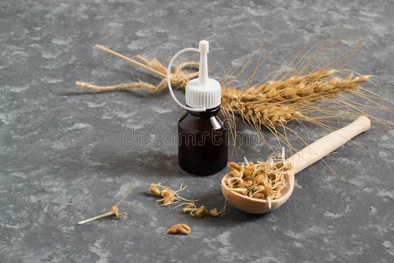 I semi del grano ed il germe di grano germinati freschi lubrificano fotografie stock libere da diritti