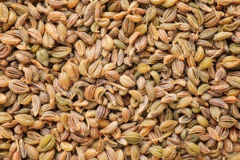 I semi del prezzemolo si chiudono su Naturale riscaldi la struttura tonificata fotografia stock libera da diritti