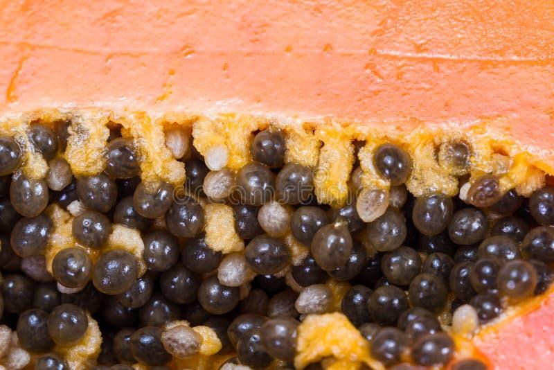 I semi della papaia si chiudono su immagine stock libera da diritti