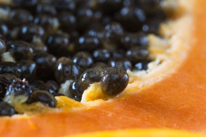 I semi della papaia su si chiudono immagine stock libera da diritti